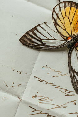Matilda Delves Dead butterfly on letter