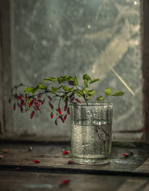 Andreeva Svoboda RED BERRIES IN GLASS BY WINDOW Flowers