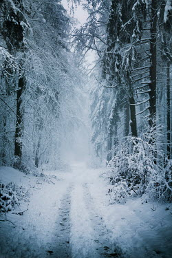 Carmen Spitznagel SNOWY COUNTRY LANE WITH TREES Snow/ Ice