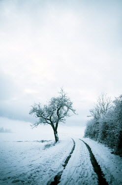 Carmen Spitznagel EMPTY COUNTRY LANE IN SNOW WITH TREE Snow/ Ice