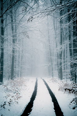 Carmen Spitznagel EMPTY COUNTRY LANE IN FOREST WITH SNOW Snow/ Ice