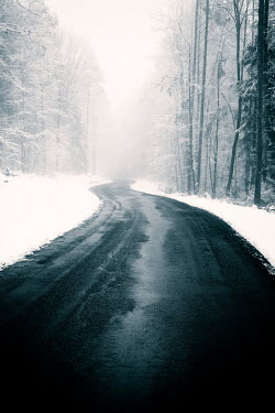 Carmen Spitznagel EMPTY COUNTRY ROAD WITH TREES IN SNOW Paths/Tracks