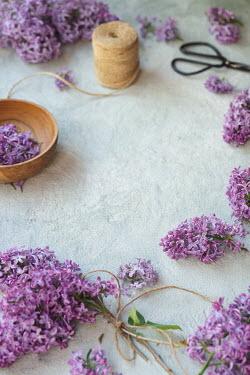 Galya Ivanova Purple flowers and string