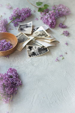 Galya Ivanova Purple flowers and old photographs