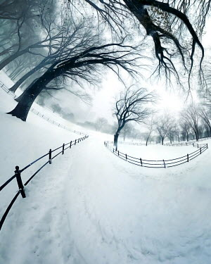 ILINA SIMEONOVA Warped path through snowy park