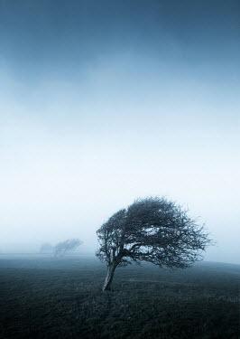 Kyle Stubbs Windblown tree in field