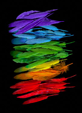 Magdalena Wasiczek Colorful feathers on black background