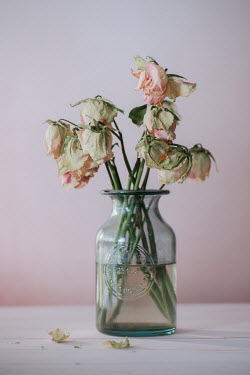 Magdalena Wasiczek Dead roses in vase