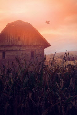 Drunaa Wooden barn in corn field