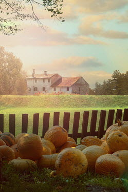 Drunaa FARMHOUSE WITH PUMPKINS IN FIELD BY FENCE Houses