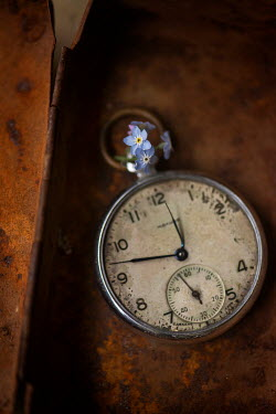 Galya Ivanova FORGET-ME-NOTS AND POCKET WATCH  IN OLD TIN BOX Miscellaneous Objects