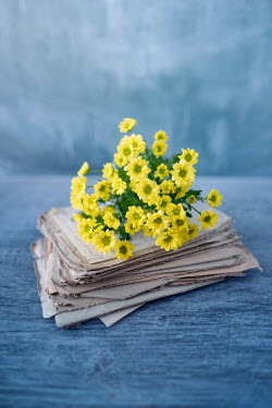 Magdalena Wasiczek YELLOW FLOWERS ON PILE OF OLD LETTERS Miscellaneous Objects