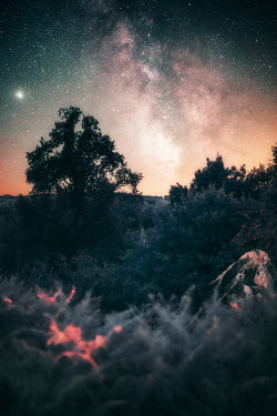 David Keochkerian TREES IN COUNTRYSIDE WITH STARRY SKY Trees/Forest