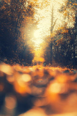 David Keochkerian COUNTRY LANE WITH GOLDEN LEAVES Paths/Tracks