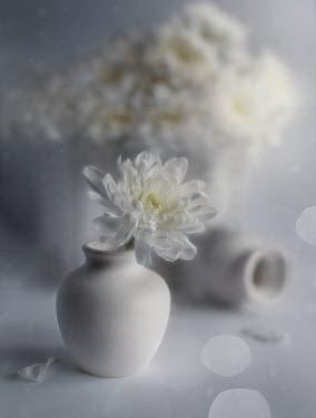 Andreeva Svoboda WHITE FLOWERS IN VASES ON TABLE Flowers