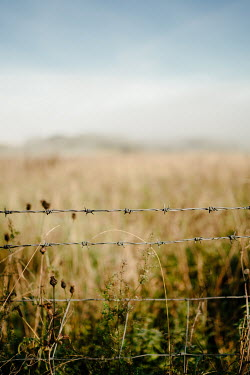 Angela Ward-Brown Barbed wire and field