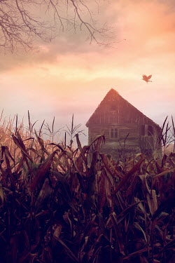 Drunaa House in cornfield
