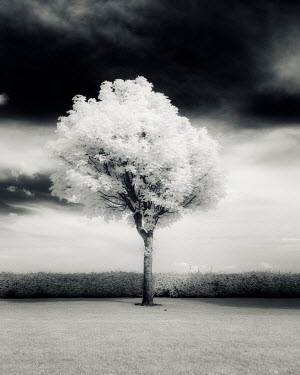 David Keochkerian TREE WITH LEAVES IN GARDEN Trees/Forest