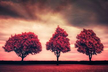 David Keochkerian THREE RED TREES IN GARDEN AT SUNSET Trees/Forest