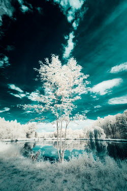 David Keochkerian TREES WITH LEAVES BY TRANQUIL LAKE Lakes/Rivers