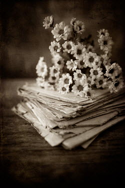 Magdalena Wasiczek SMALL FLOWERS ON STACK OF OLD LETTERS Flowers