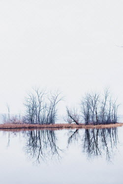 Isabelle Lafrance Bare trees by lake