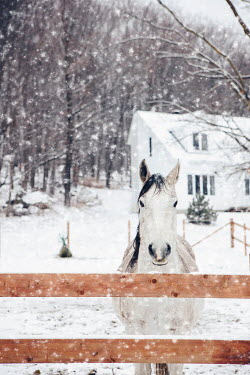 Isabelle Lafrance Horse in field during winter