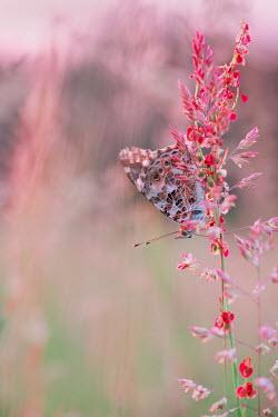 Magdalena Wasiczek Butterfly on flowers