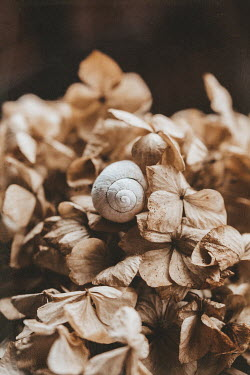 Magdalena Wasiczek Snail and brown leaves