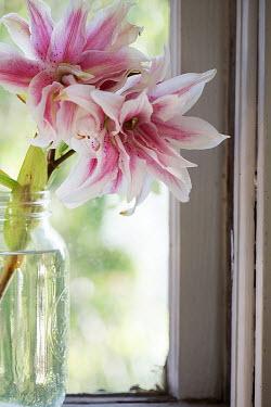 Alison Archinuk Stargazer lily flowers in mason jar on window sill