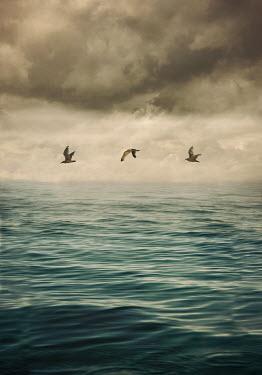 Lyn Randle Seagulls flying over sea