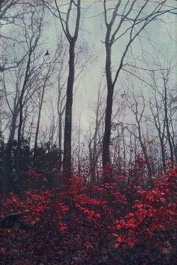 Dirk Wustenhagen Forest during autumn
