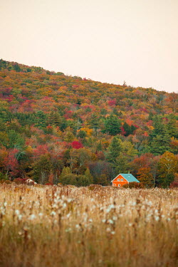 Jean Ladzinski House and field by hill with autumn forest