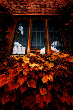 Nic Skerten WINDOW OF HISTORICAL HOUSE WITH AUTUMN LEAVES Building Detail