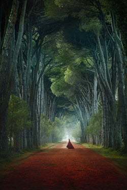 Terrence Drysdale WOMAN WITH CAPE IN AVENUE OF TALL TREES Women