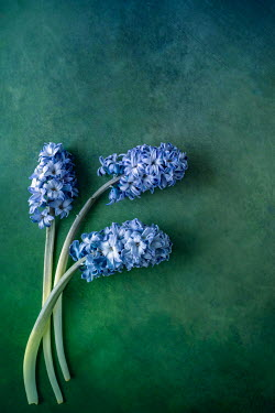 Magdalena Wasiczek BLUE FLOWERS LYING ON GREEN BACKGROUND Flowers