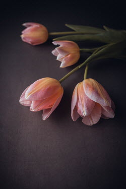 Magdalena Wasiczek BUNCH OF PINK TULIPS Flowers