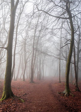 Trevor Payne EMPTY PATH IN MISTY WINTRY FOREST Paths/Tracks