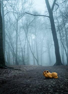 Trevor Payne TEDDY BEAR LYING IN FOGGY FOREST Miscellaneous Objects
