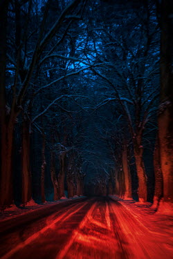 Natasza Fiedotjew road in woods at night