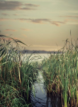 Elisabeth Ansley STREAM AND LAKE WITH REEDS AT DUSK Lakes/Rivers