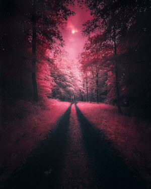 David Keochkerian COUNTRY LANE AND WITH PINK LIGHT Paths/Tracks