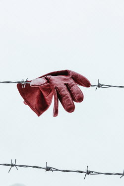 Matilda Delves RED LEATHER GLOVE HANGING ON BARBED WIRE Miscellaneous Objects
