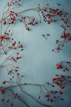 Magdalena Wasiczek BORDER OF SMALL RED BERRIES AND TWIGS Flowers