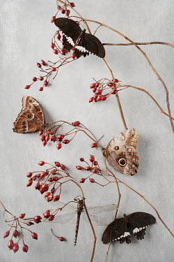 Magdalena Wasiczek SMALL RED BERRIES DRAGONFLY AND BUTTERFLIES Insects