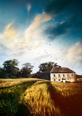 Sandra Cunningham HISTORICAL HOUSE WITH WHEAT FIELDS IN SUMMER Houses