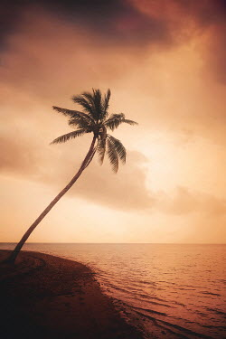 Evelina Kremsdorf BEACH AND PALM TREE AT SUNSET Seascapes/Beaches