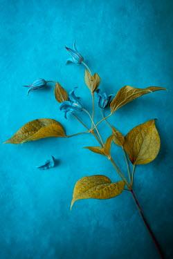 Magdalena Wasiczek BLUE FLOWERS WITH GREEN LEAVES Flowers