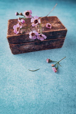 Magdalena Wasiczek PINK FLOWERS ON OLD BOX Flowers