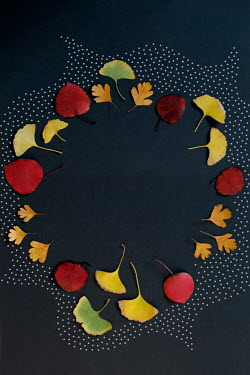 ILINA SIMEONOVA CIRCLE OF LEAVES WITH DOTS Flowers